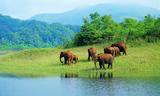 Small kerala tourism wild