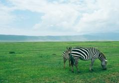 Отдых на океане в Танзании